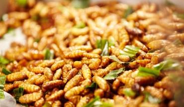 entomophagie pourquoi manger des insectes