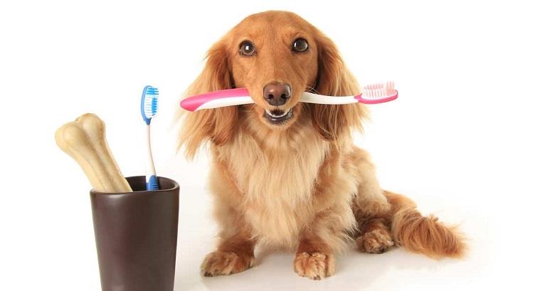 Chien brosse à dent